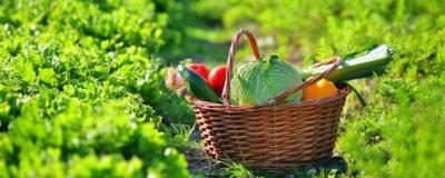 Les légumes bios sont des alliés puissants dans le traitement en nutrithérapie, ils apportent vitamines et minéraux de manière naturelle sans jamais risquer le surdosage, vous pouvez donc les ajouter en variété dans vos menus.