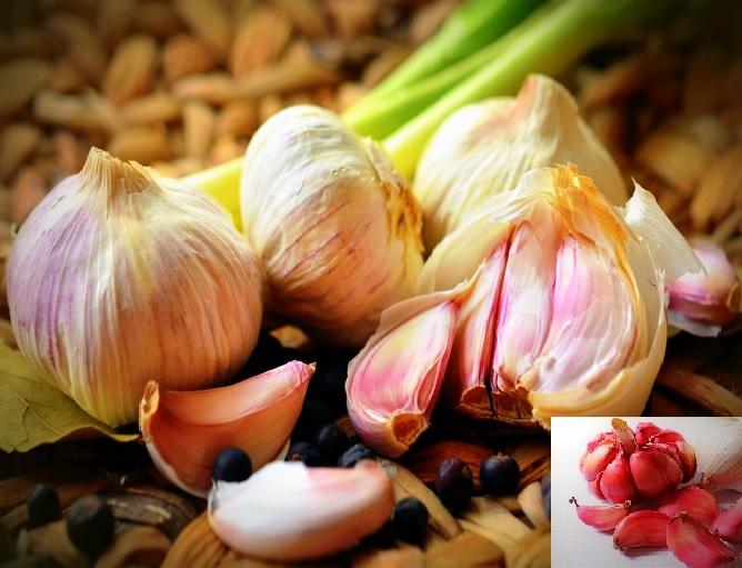 L'ail est un puissant antiinfectieux à utiliser à dose thérapeutique en nutrithérapie. Alors il ne faut surtout pas s'en priver dans l'alimentation!