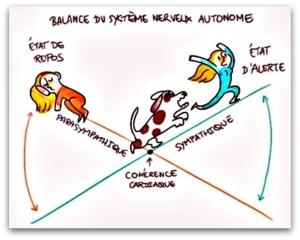 Physionutrition et nutrithérapie : La santé étant l'équilibre entre le sympathique et le parasympathique.